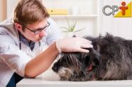 Pulgas causam dermatite em cães? Sim, causam!