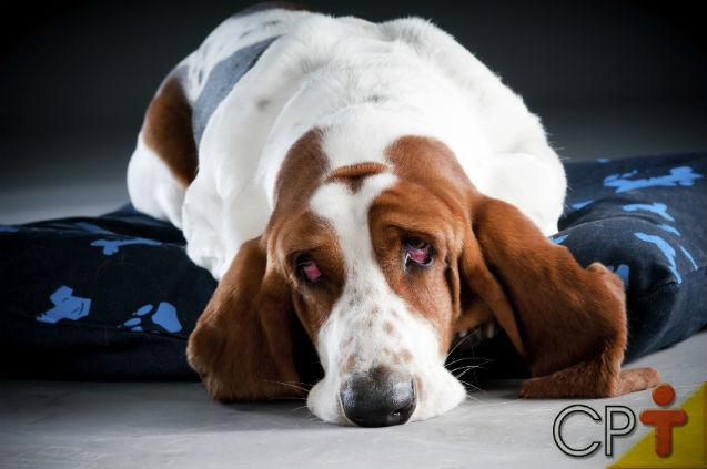 Especialista: Giárdia em cães é possível? Sim, é!   Notícias Cursos CPT