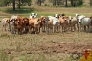 Especialista: Pastejo desuniforme é problema para o pecuarista!