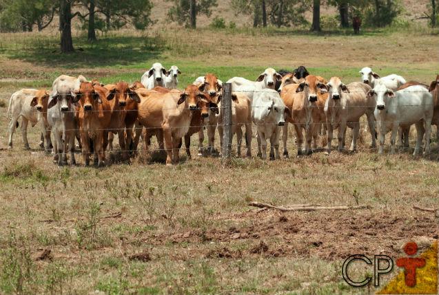 Especialista: Pastejo desuniforme é problema para o pecuarista!   Artigos Cursos CPT