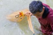 Sistemas extensivos de criação de peixes: sim ou não?