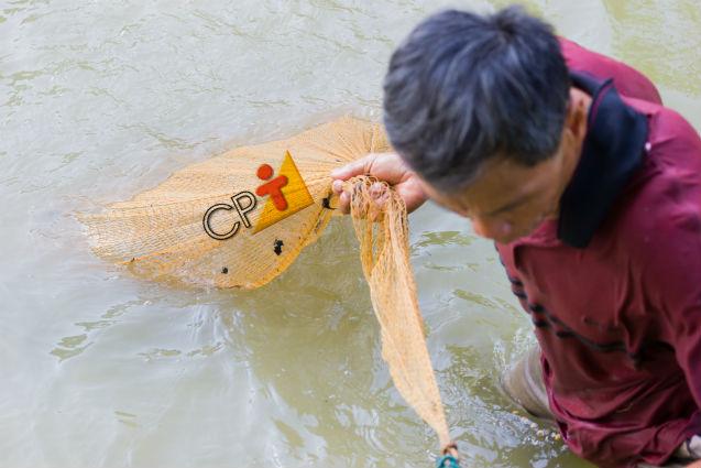 Sistemas extensivos de criação de peixes: sim ou não?   Artigos Cursos CPT