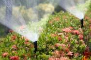Especialista: Sistema de irrigação com linhas enterradas tem mais vida útil