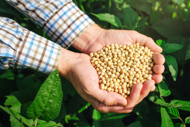 Brasil colhe 92% da área cultivada de soja já na primeira quinzena de abril