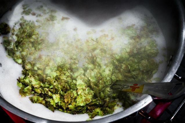 Produção de cerveja artesanal: qual a importância do lúpulo?   Artigos Cursos CPT