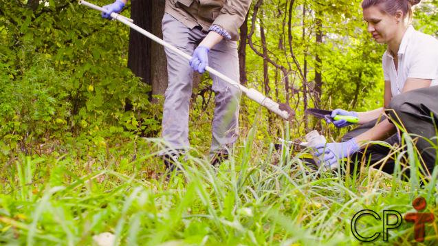 Por que avaliar a fertilidade do solo antes de plantar?   Dicas Cursos CPT