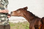 Minha égua morreu. Como vou alimentar o potro órfão?