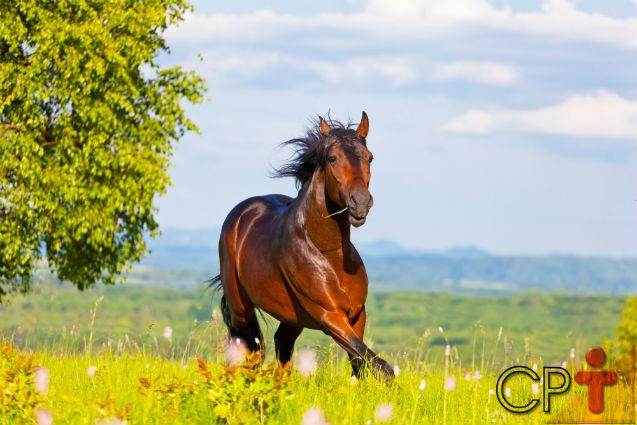 Formação de pastagens para equinos: minimize os riscos de fracasso   Dicas Cursos CPT