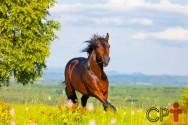 Formação de pastagens para equinos: minimize os riscos de fracasso