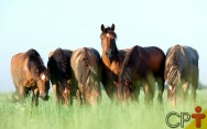 Quer melhorar geneticamente seus equinos? Inseminação artificial neles!