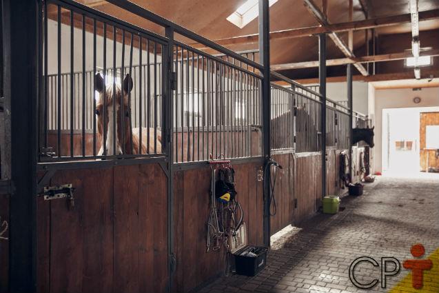 Cio induzido em equinos: como proceder?   Artigos Cursos CPT