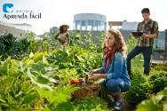 Fique por dentro da legislação de produtos orgânicos