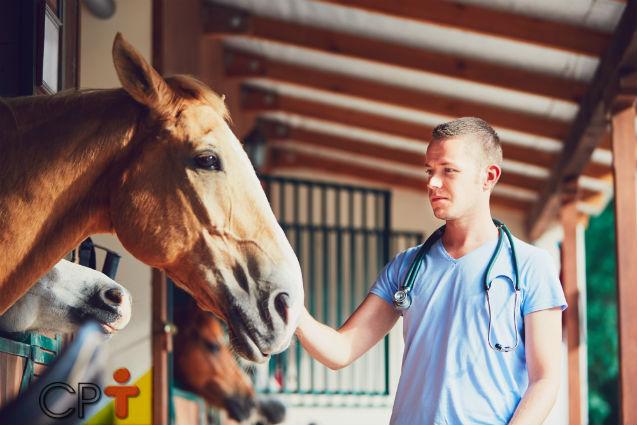 Exame andrológico em cavalos doadores de sêmen. Por que fazer?   Artigos Cursos CPT
