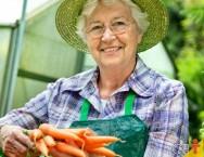 Procura dos consumidores por orgânicos faz aumentar produção