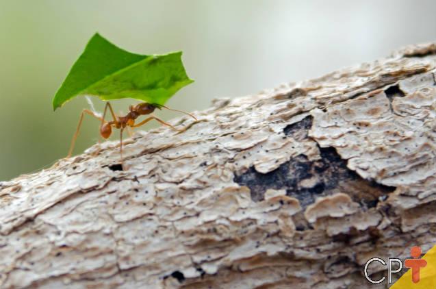 Conheça o Curso CPT a Distância e Online Controle de Formigas Cortadeiras