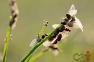 Como os formigueiros são formados, você sabe?
