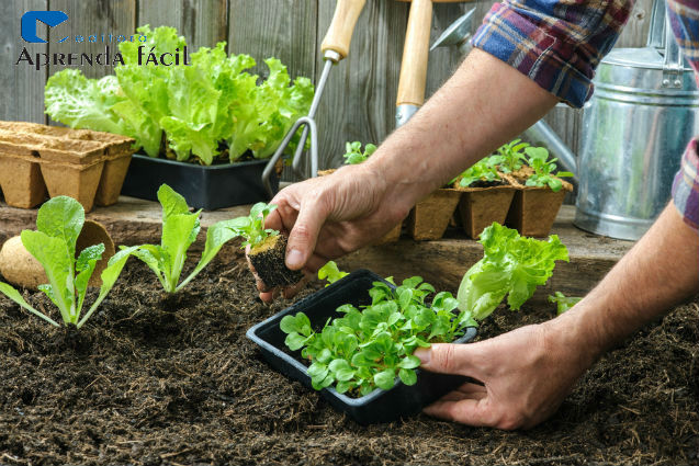 Aumento de 21% indica futuro promissor para indústria de fertilizantes