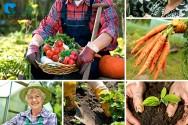 A evolução da comercialização de produtos orgânicos