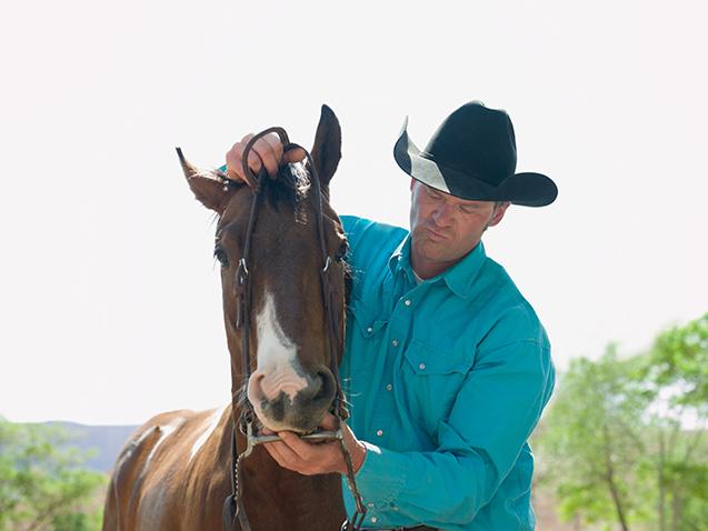 Cavalo sendo domado