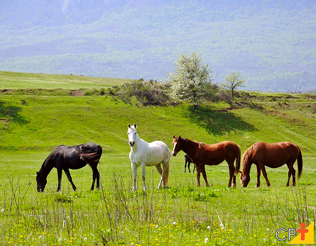 Cavalos pastagem