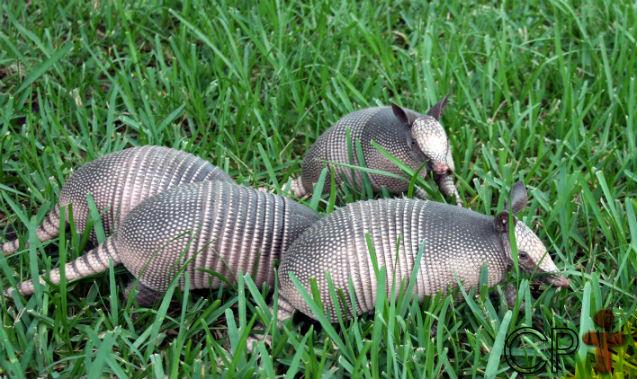 Medidas preventivas para conter o ataque de formigas cortadeiras   Artigos Cursos CPT