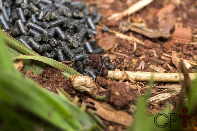 Quer acabar com formigueiros sem gastar muito? Isca neles!   Artigos Cursos CPT