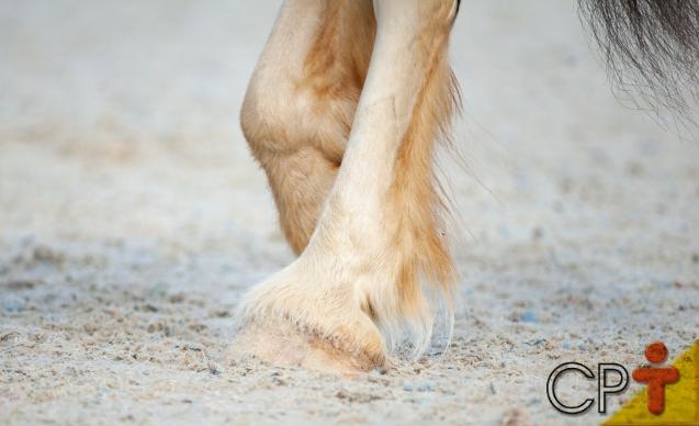 Cascos de cavalos regeneram? Eles voltam a crescer?   Artigos Cursos CPT