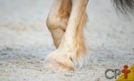 Cascos de cavalos regeneram? Eles voltam a crescer?