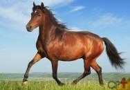 Aprumo perfeito no levantar dos pés de cavalos. O que isso significa?