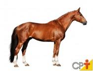 Quando e como o pé de um cavalo está em aprumo perfeito, você sabe?