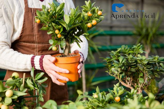 7 espécies de bonsai para ter em casa