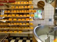 Produção de queijo: artesanal e industrial