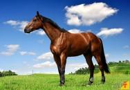 Conheça e aprenda a identificar as pelagens de cavalos