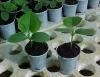 Agricultura orgânica engloba questões de saúde, ecológicas e sociais