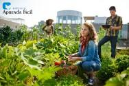Desafios da agricultura orgânica