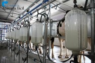 Atenção às novas normas para a produção de leite