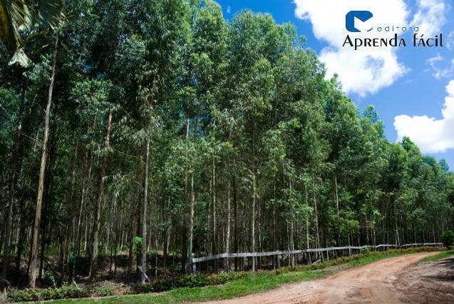 Dicas imperdíveis para plantar eucalipto
