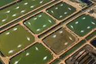 Viveiros para a criação de peixes: qual o melhor tamanho e formato?