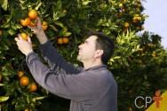 08 de junho: uma homenagem ao citricultor