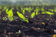 Como deixar seu solo mais produtivo