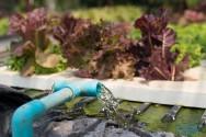 Benefícios e vantagens da hidroponia