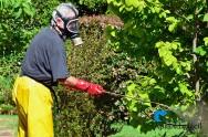 Conheça algumas pragas do jardim