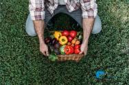 Alimentos tradicionais X alimentos orgânicos