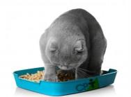 Prisão de ventre em gatos: por que isso acontece?