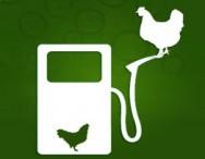 Avião da Nasa recebe biocombustível de gordura de frango