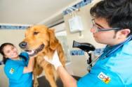 Banho e tosa em cães e gatos: como deve ser o profissional?