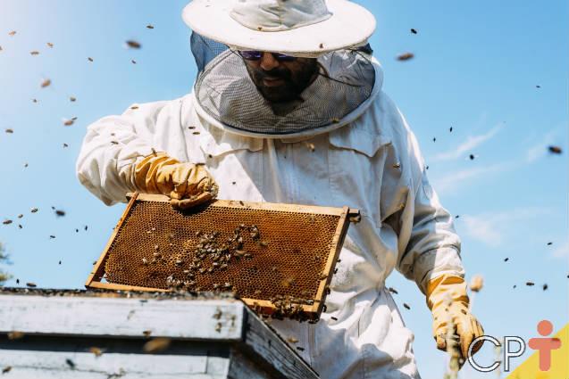Baixe agora o E-Book Tudo sobre abelhas com ferrão (Apis mellifera)