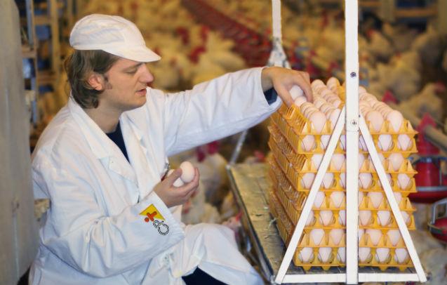 Vai vender ovos de galinhas? Conheça as exigências dos consumidores!    Artigos Cursos CPT
