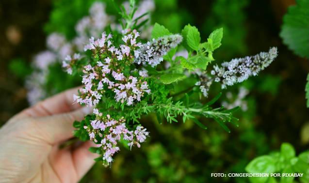 5 plantas condimentares e medicinais para cultivar em casa