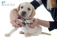 Dicas fáceis para cortar as unhas do seu cão
